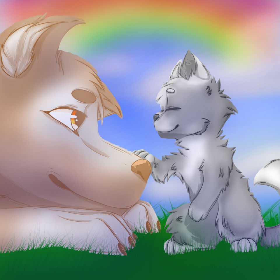 Cat and Dog entry :3