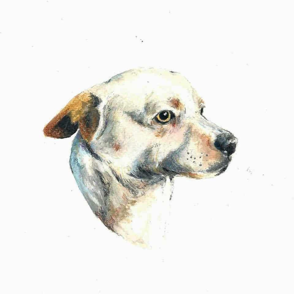 Quiltro Chilensis Illust of esteban Perez Ojeda DOGvsCAT_DOG