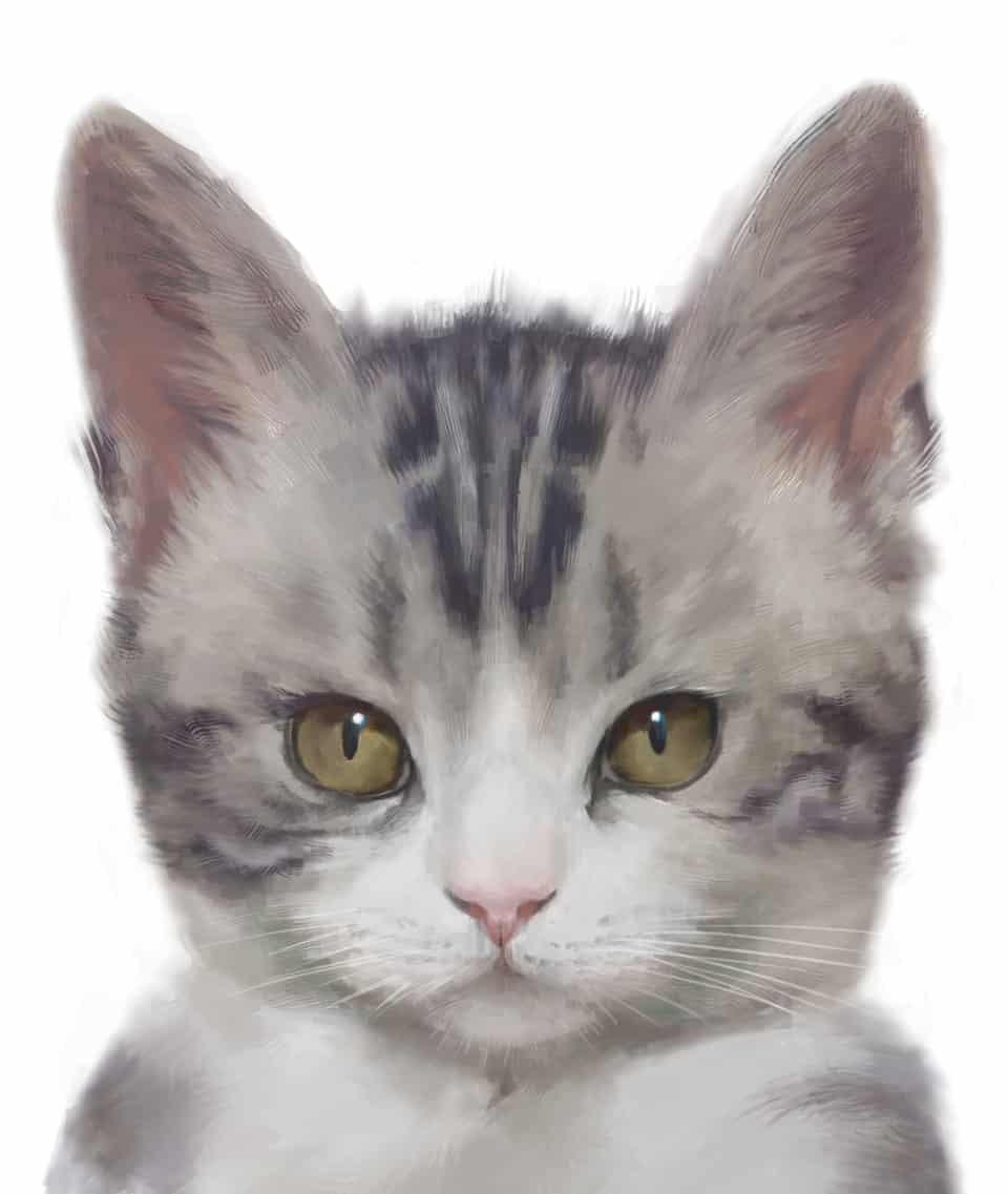 喵酱 Illust of Umekawa 貓 cat リアル絵 medibangpaint