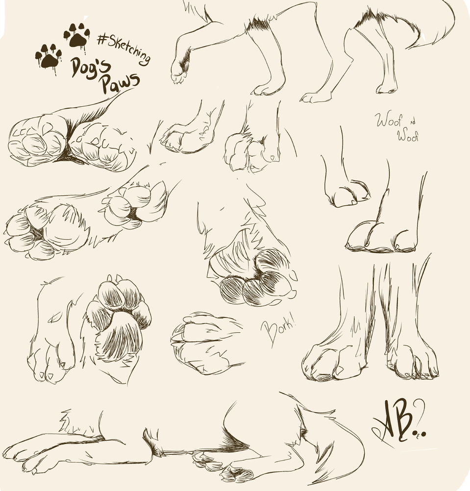 dogs paws :3