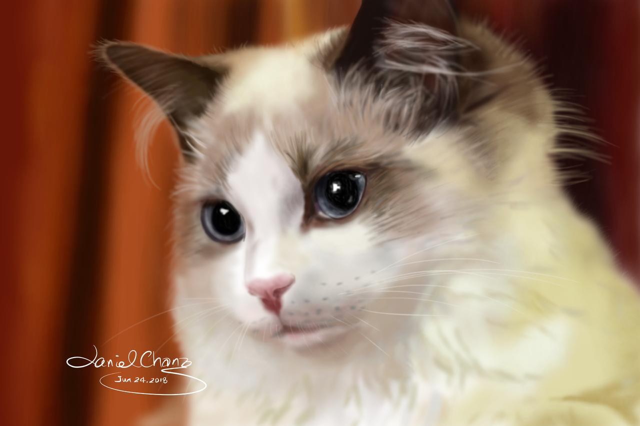 cat-kelly