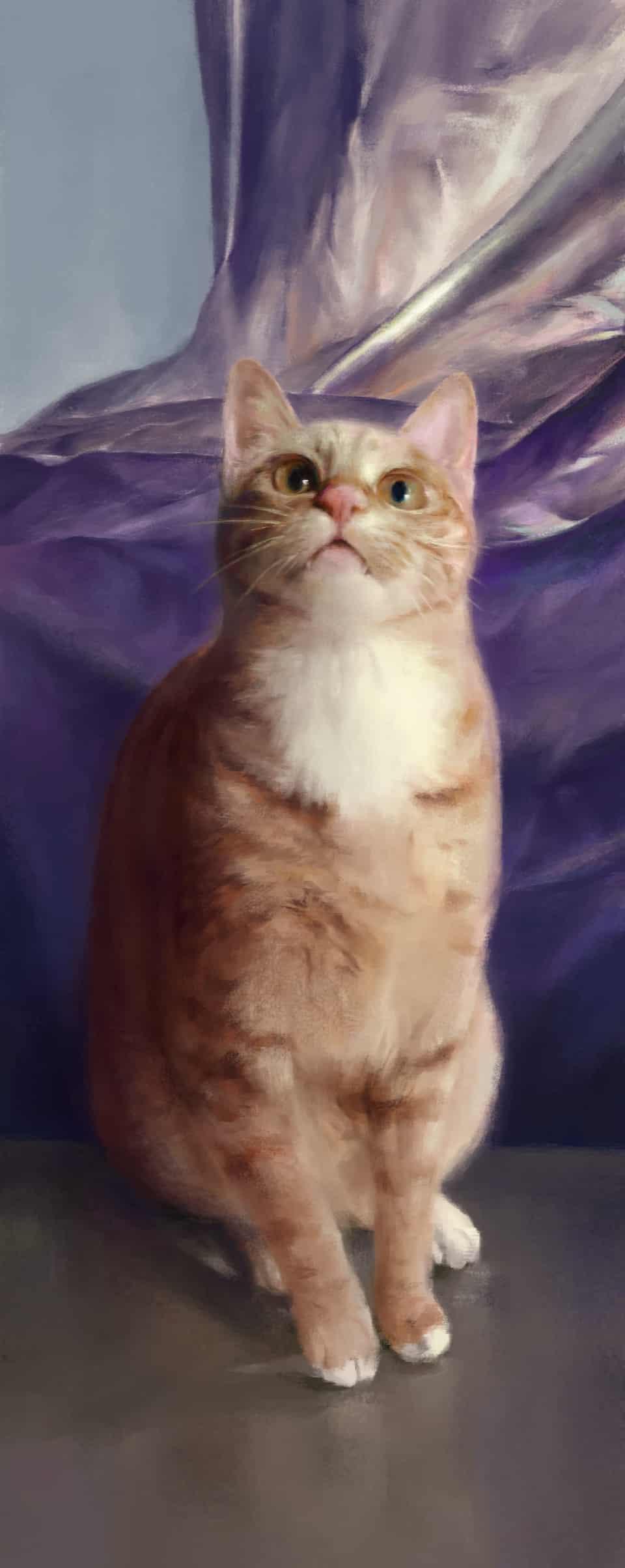 猫猫 Illust of Umekawa DOGvsCAT_CAT リアル絵 cat 貓