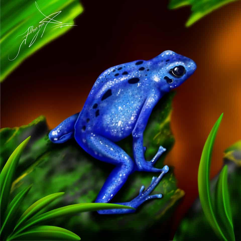 animales y plantas rana azul Illust of maicolaroca brag.your.country