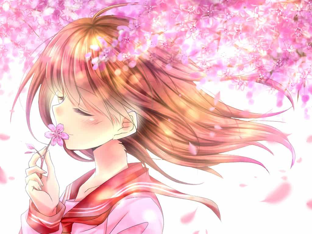 來自櫻花飄舞的季節~