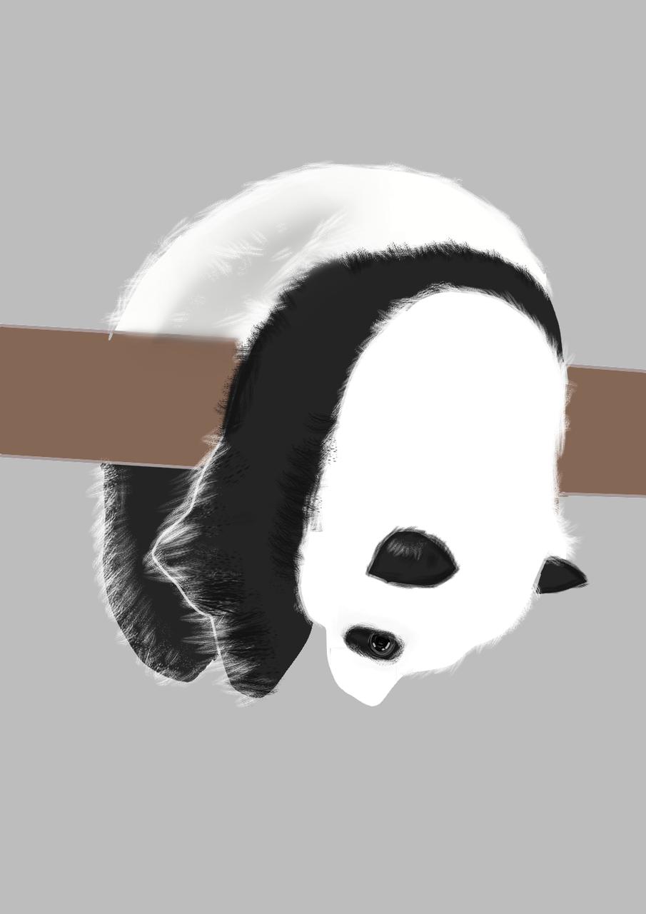 [中国]熊猫 Illust of 金纪 brag.your.country medibangpaint panda