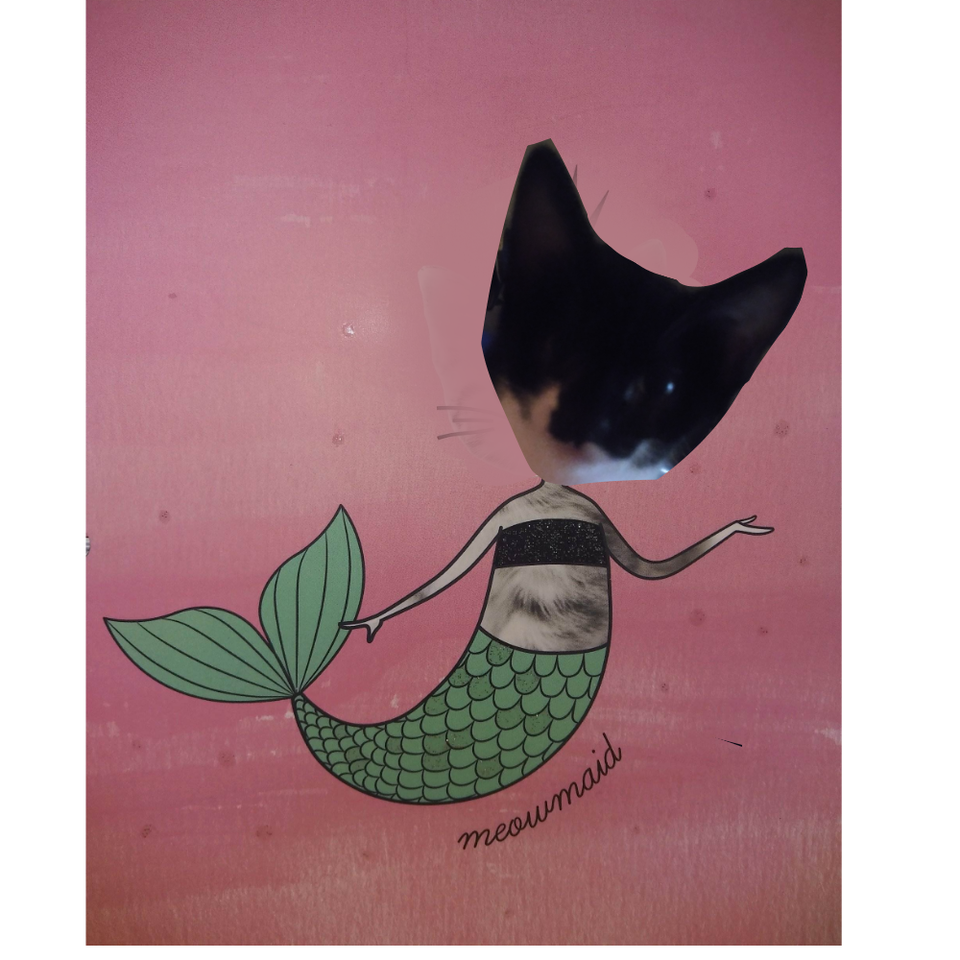meowmaid xP Illust of ✨random pollito✨ medibangpaint beautiful sky meowmaid bby Dora