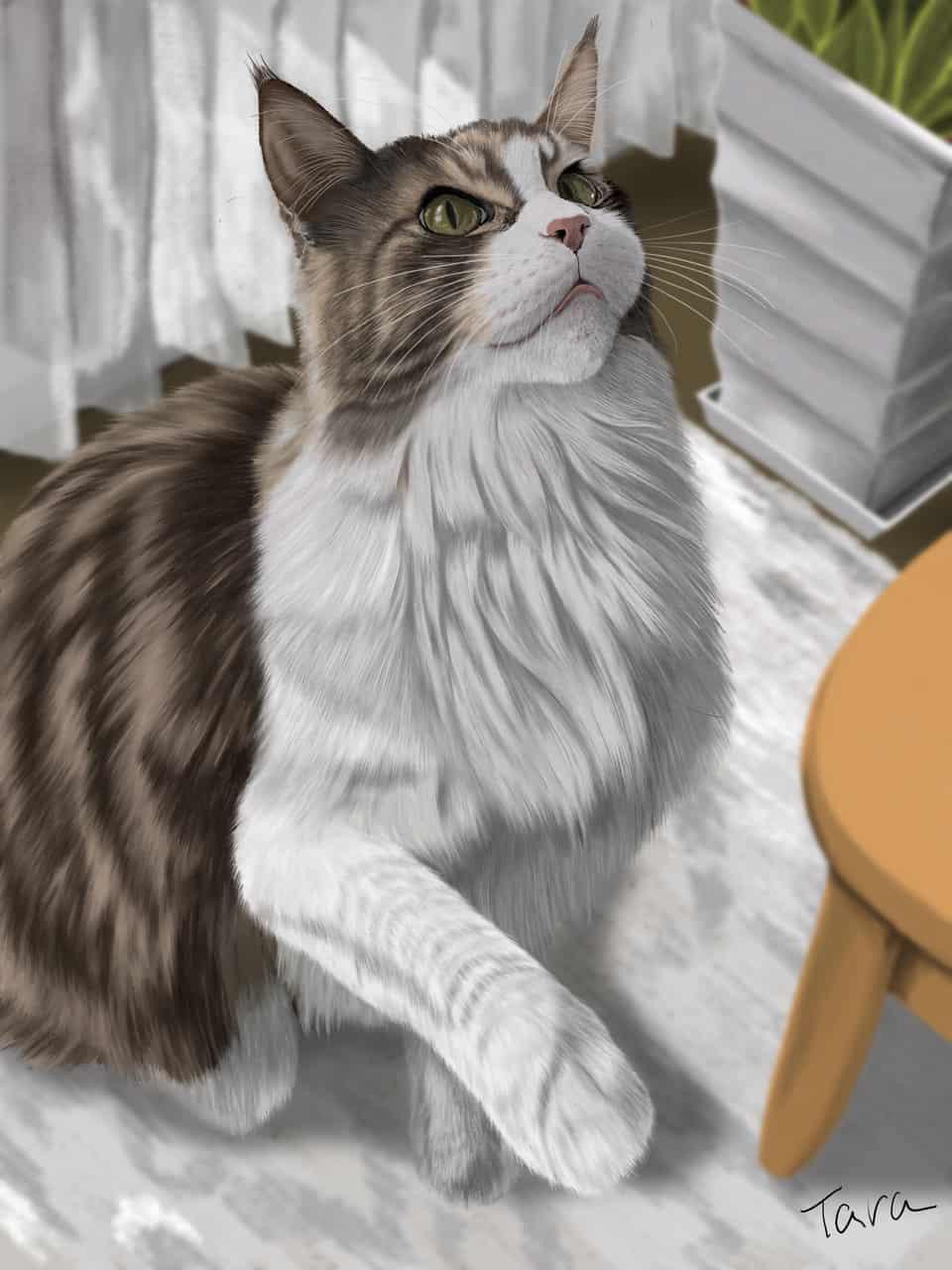 メインクーン2 Illust of ekadhooj DOGvsCAT_CAT cat