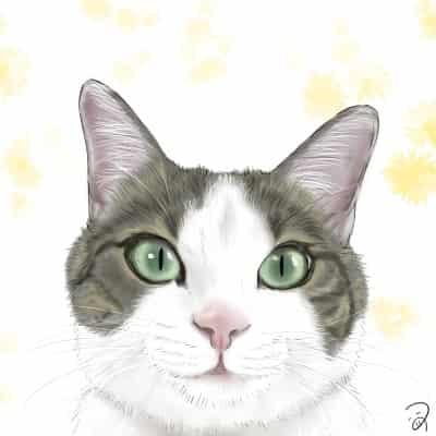きじしろさん Illust of つぅ cat キジ白