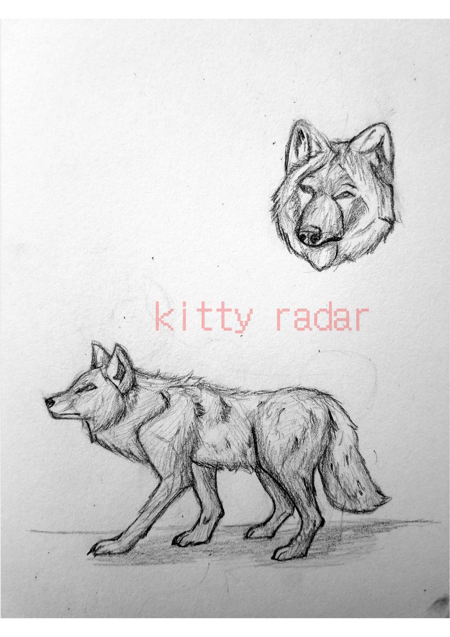 r/therewasanattempt Illust of kitty radar medibangpaint traditional wolf realism
