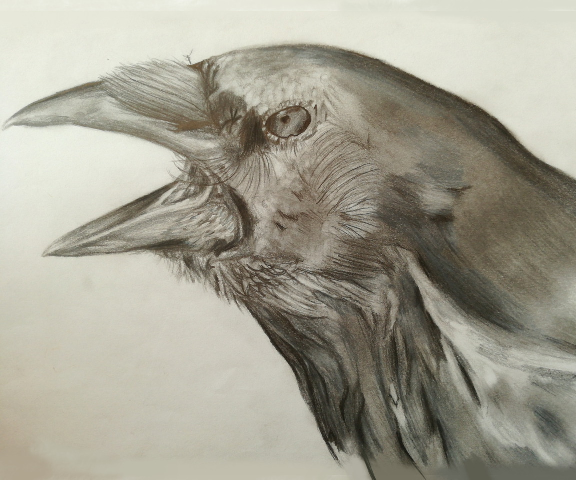 Illust of Queen Of A Stellar War medibangpaint birds