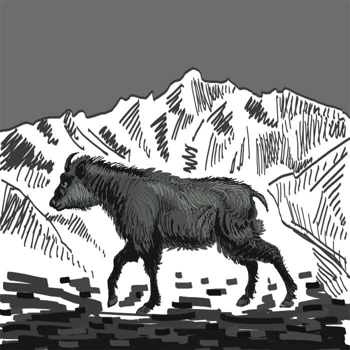 The Kamoshika  Illust of lokhnet January2021_Contest:OC March2021_Creature medibangpaint drawing handdrawn cool oc sketch mountain blackandwhite medibang