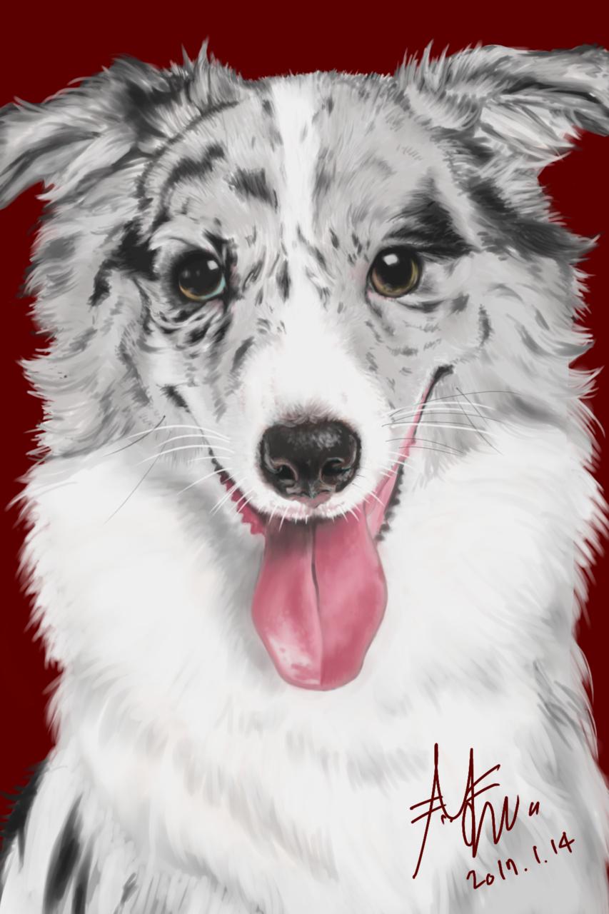 bordercollie LEAH Illust of anco medibangpaint puppy dog bordercollie