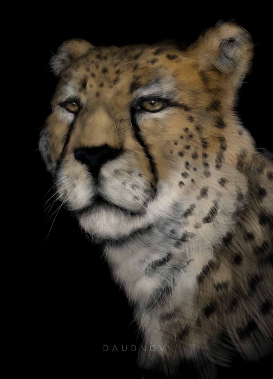 Cheetah Illust of daudnov medibangpaint animal realist cheetah nature cat wildlife fur