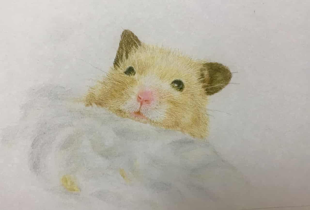 ハムスター Illust of なっちゃん Hamster animal 色鉛筆画 絵描き キンクマ