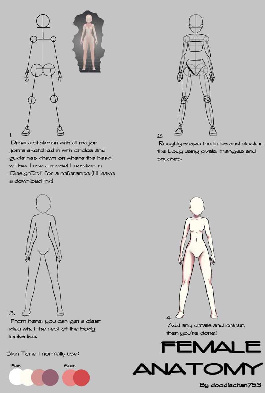 Female Anatomy Tutorial - doodlechan753   Illustrations - MediBang