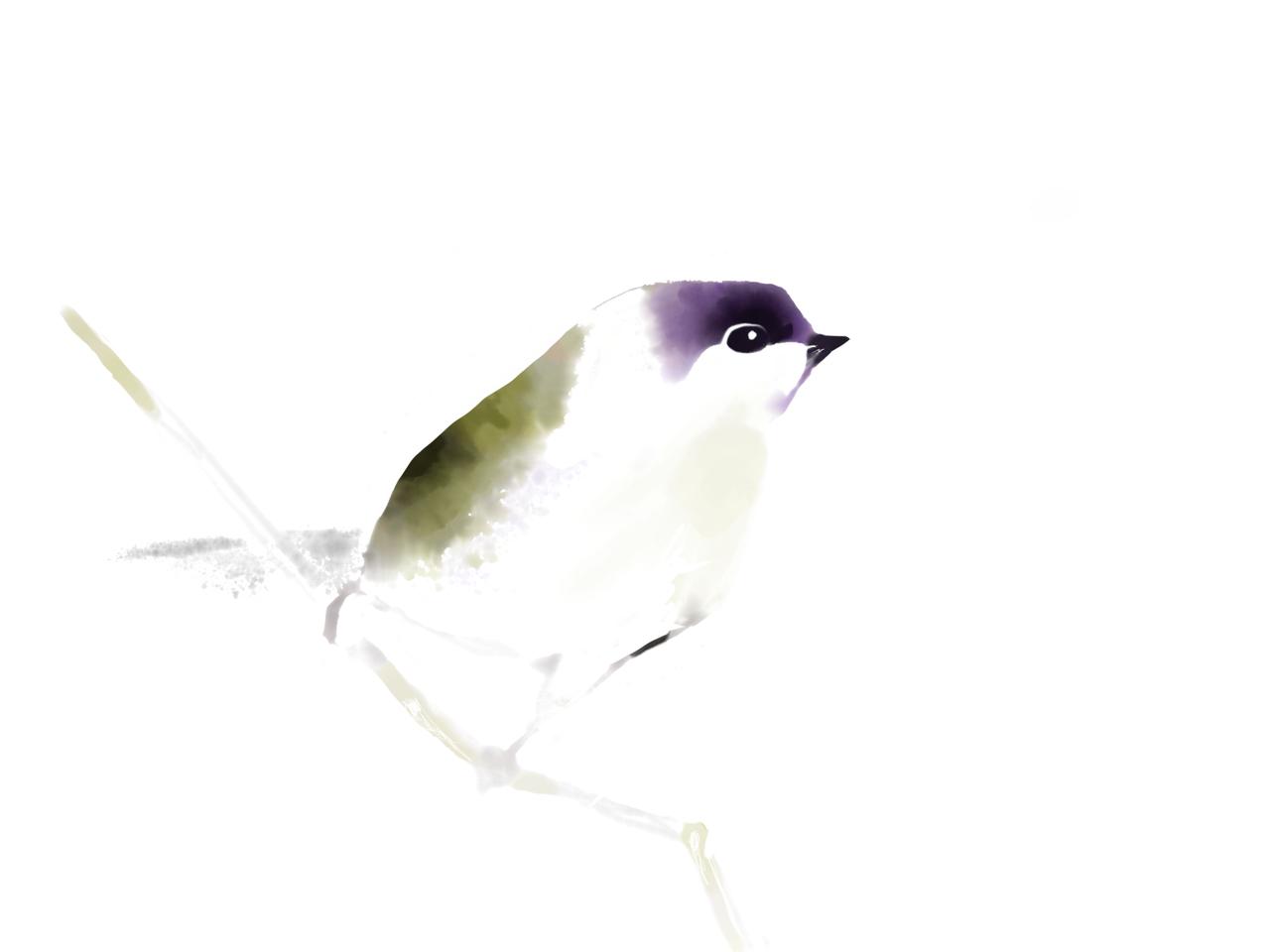 bird Illust of Sunevto medibangpaint birds watercolor Artstreet _ranking