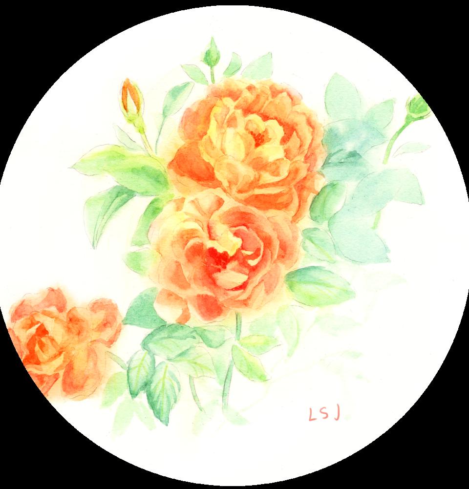 月季 Illust of 流水静 April.2020Contest:Color 花卉 水彩画 sketch