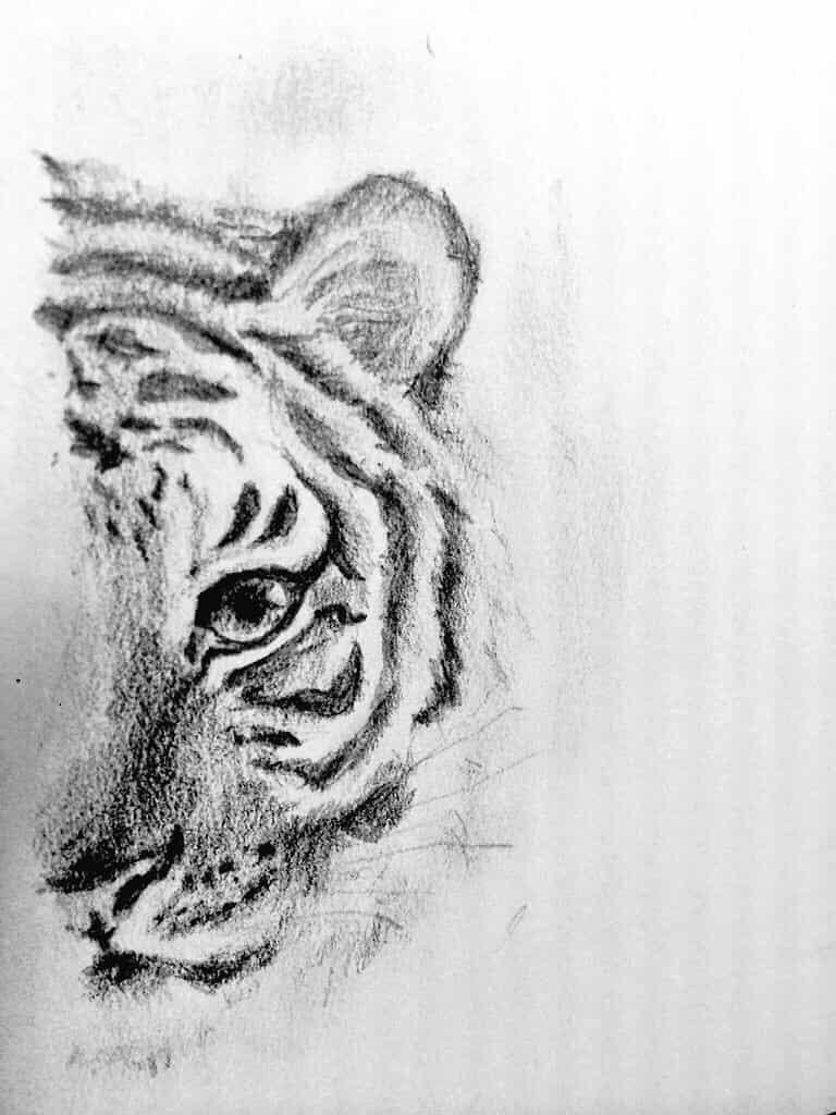 虎 Illust of なっちゃん 虎 鉛筆画