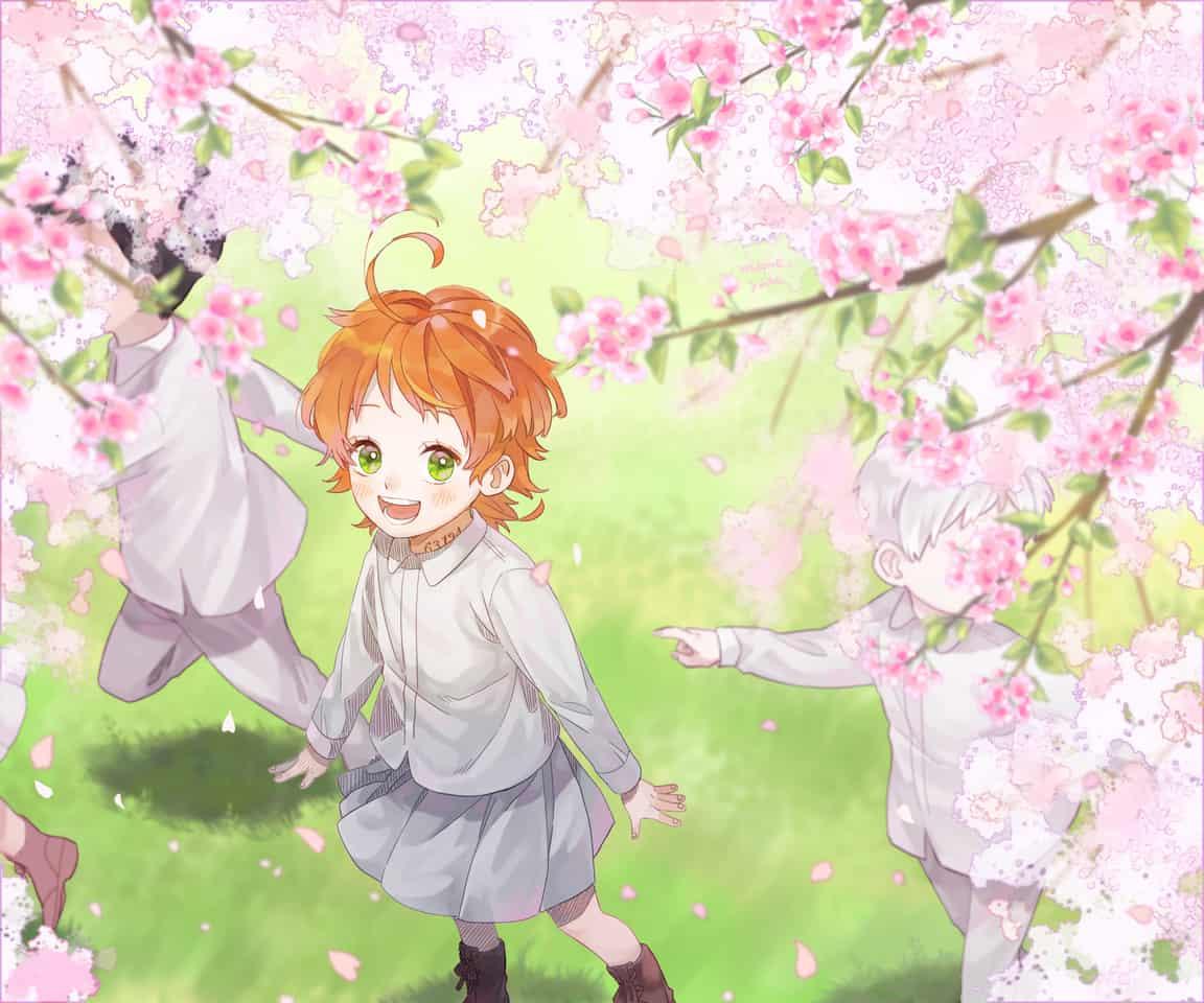 桜 Illust of mametubu ThePromisedNeverland sakura エマ