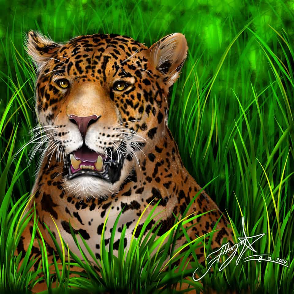 animales y plantas  jaguar colombiano  Illust of maicolaroca brag.your.country