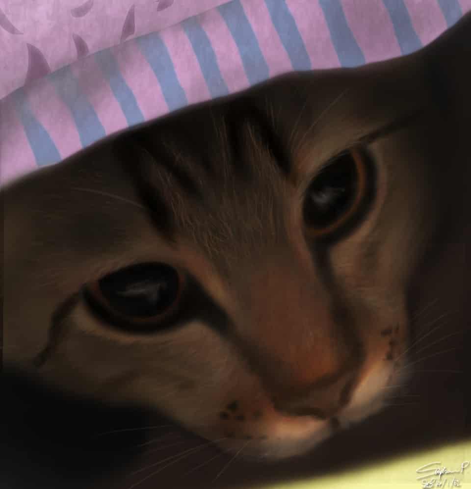 My cat =^^=
