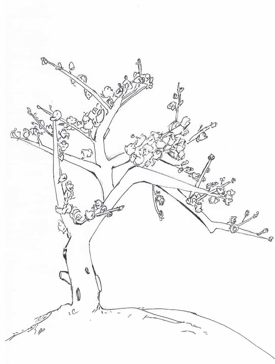 Tree (木) Illust of Ng Lei Weng kyoto-illust2019 Bloom Tree Kyoto Spring