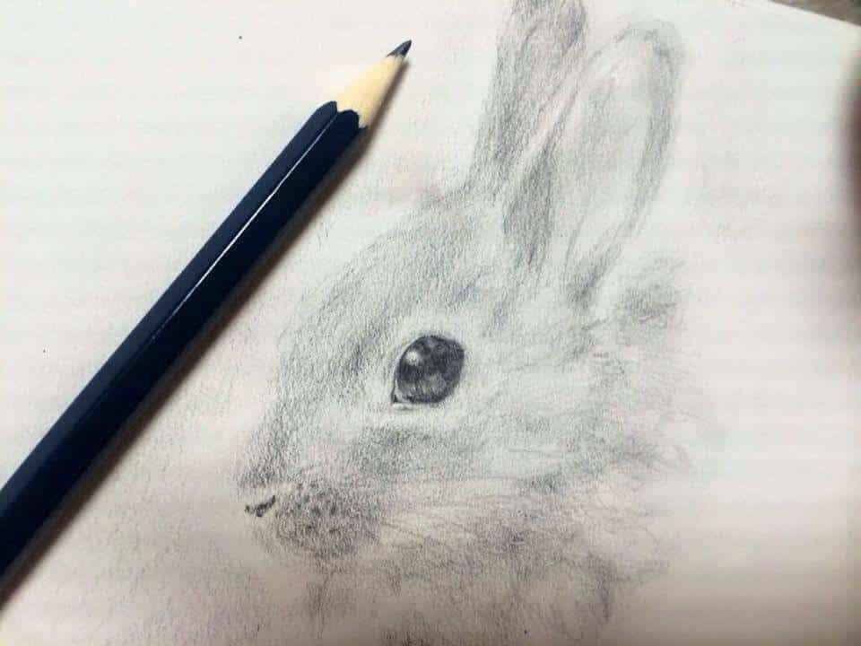 うさぎ Illust of なっちゃん rabbit 鉛筆画