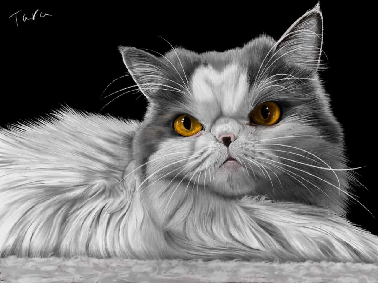 エキゾチックロングヘアー Illust of ekadhooj cat エキゾチックロングヘアー painting 猫絵 絵画 illustration animal エキゾチック ペイント デジタルアート